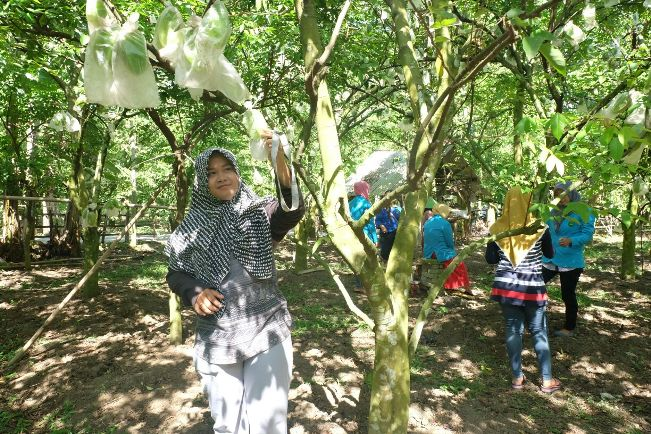 Agrowisata Kebun Blimbing Grobogan