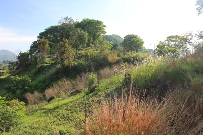Bukit Lutung via Jalanwisata