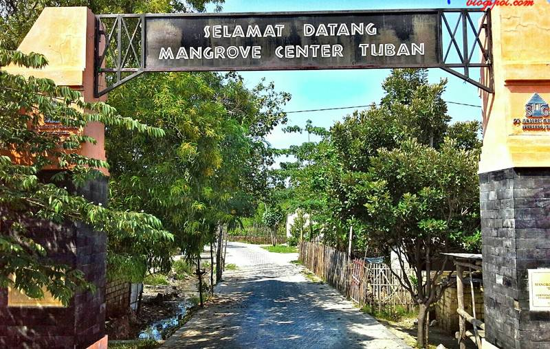 Mangrove Center via travpacker