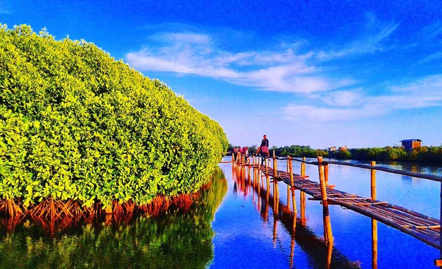 Hutan Mangrove Pantai Congot via Kotajogjacom