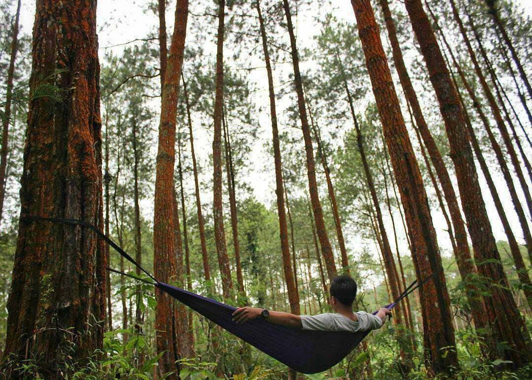 Hutan Pinus Girimulyo via @arifsejati_