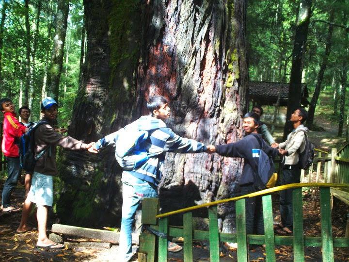 Hutan Walitis via tani-temanggung.blogspot.com