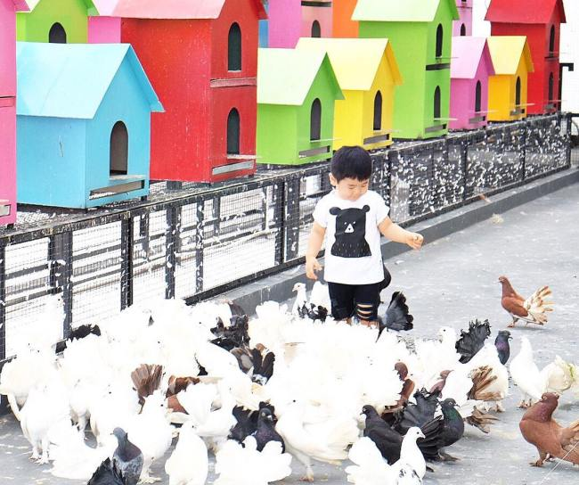 Burung Merpati di Rabbit Town