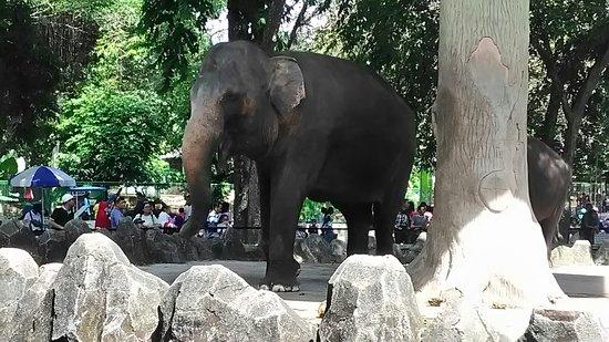 Gajah di Kebun Binatang Ragunan via tripadvisor