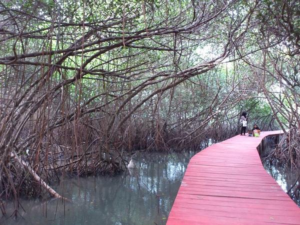 Jembatan Merah Hutan Mangrove via panoramio-com