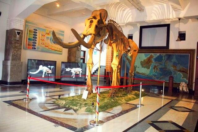 Replika Fosil Gajah Purba Blora via Infobloracom