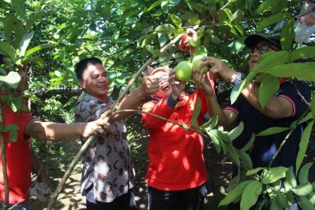 Wisata Buah Botania Garden via RRI