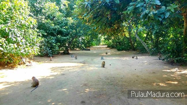 Wisata Rimba Monyet Nepa via Pulaumadura