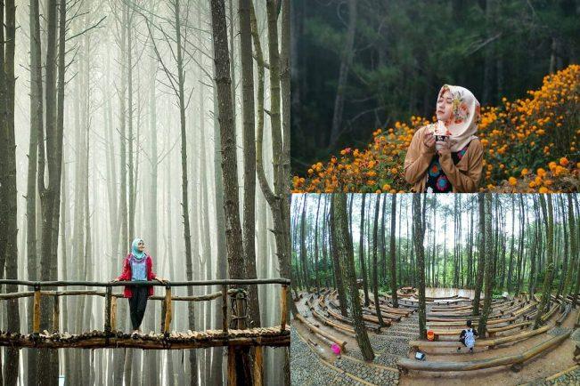 Hutan Pinus Dlingo via @krisskoginanjar_ (kiri), @vembri_prima (kanan atas), @gunawanjir (kanan bawah)
