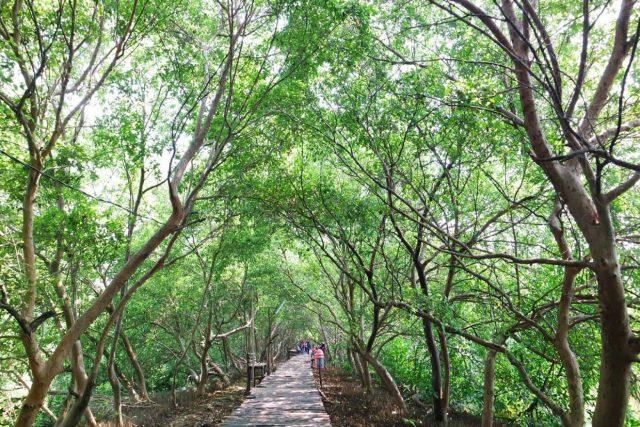 Hutan mangrove Jakarta via indahfajarwatii.blogspot.co.id