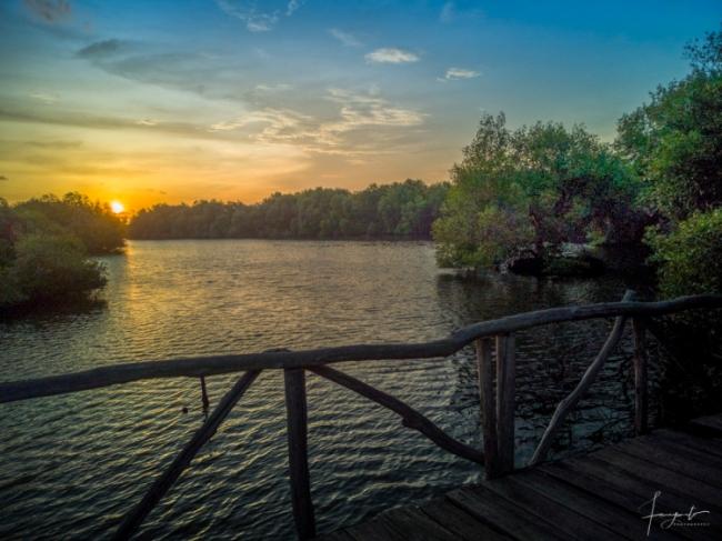 Sunset di Hutan Mangrove via Fanyanto