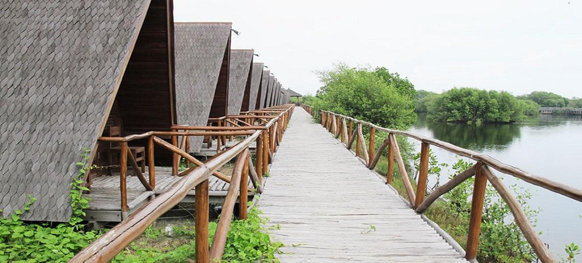 View yang Cantik Hutan Mangrove PIK via Uai.ac.id