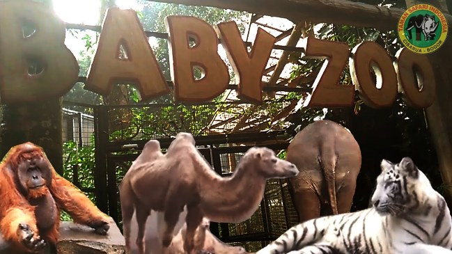 Baby Zoo via Youtube