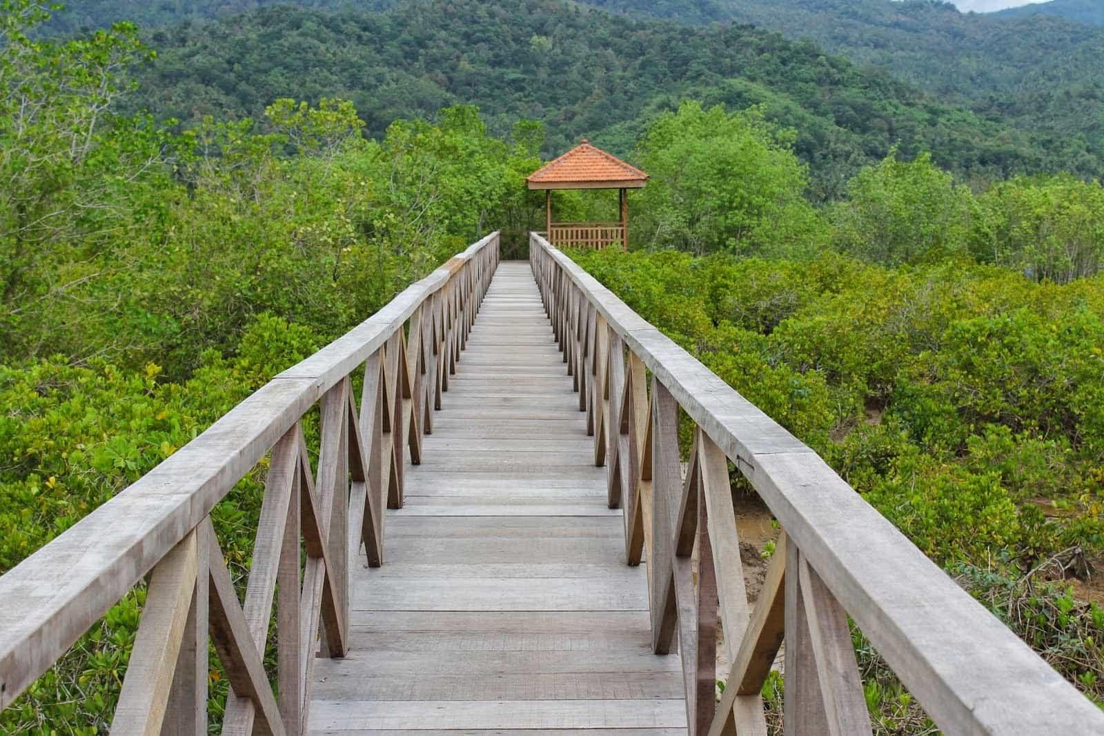 Hutan Mangrove Cengkrong