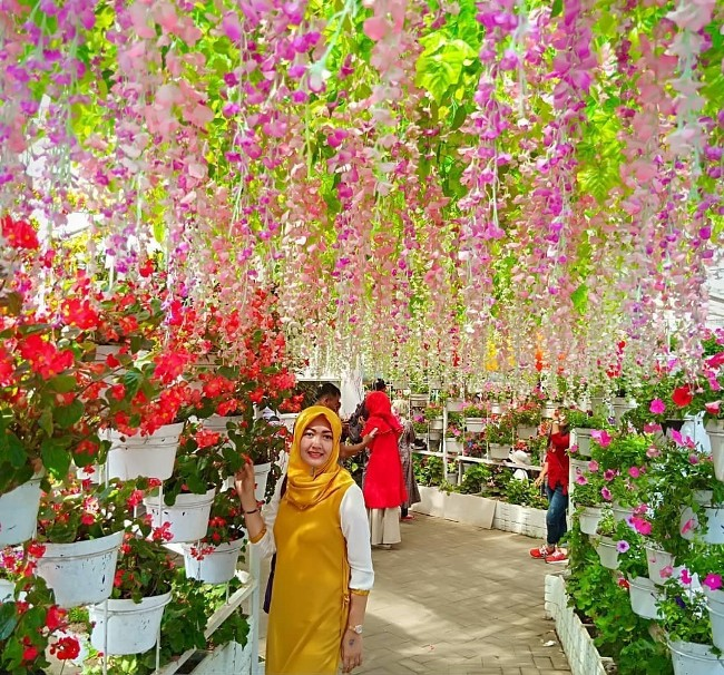 Taman Bunga Celosia Nan Cantik