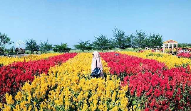 Kebun Bunga Celosia Parengan Park