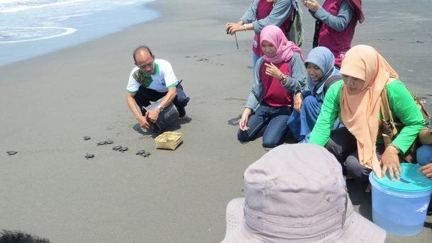 Pelepasan Anak Penyu di Pantai Pelangi Bantul via Bantulkab