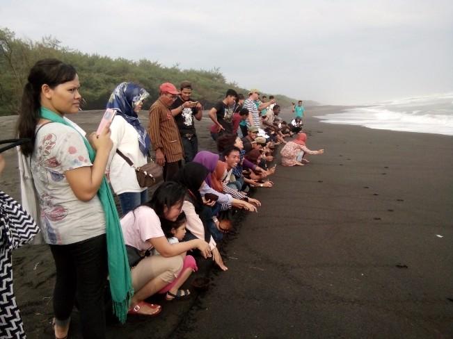 Pelepasan Penyu di Pantai Gua Cemara via Wikipedia