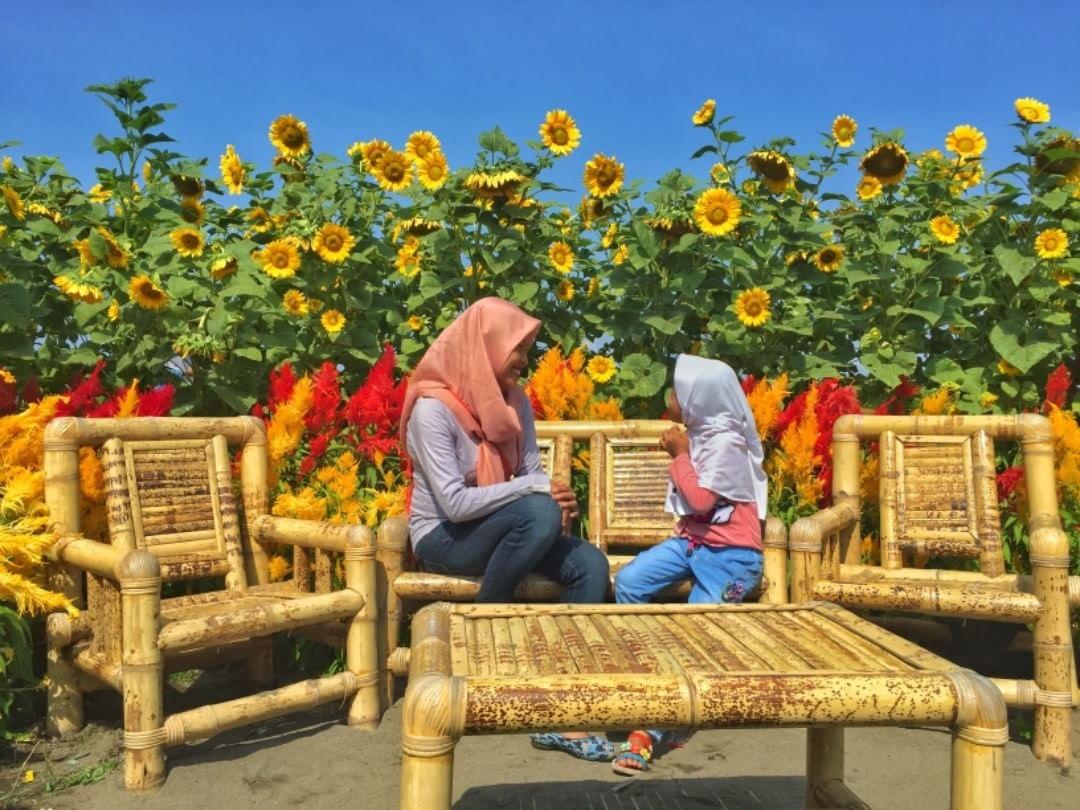 Taman Bunga Matahari di Perengan Park, Via IG @auraaquina01