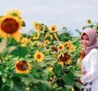 Taman Bunga Matahari via Hipwee