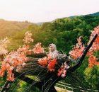 Foto di Sangkar Burung Bukit Mojo Bantul