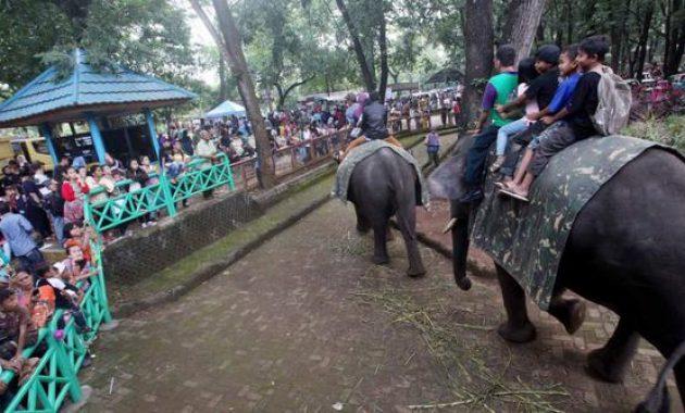 Naik Gajah via mbandungcom