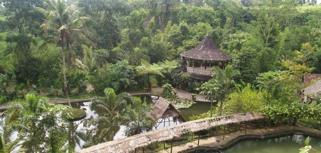 Desa Wisata Pentingsari via Visitingjogja