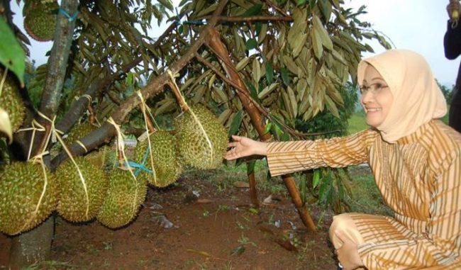 Wisata Edukasi Watu Simbar via Jurnalasiacom