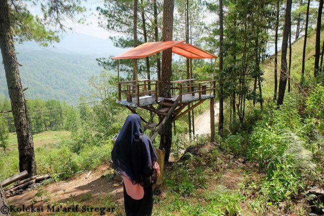 Rumah Pohon Genting Foto Oleh Maarif Siregar