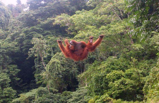 Taman Nasional Hutan Ketambe