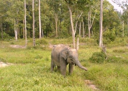 Pusat Latihan Gajah