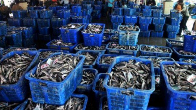 Hasil Laut Segar via Harapan Rakyat