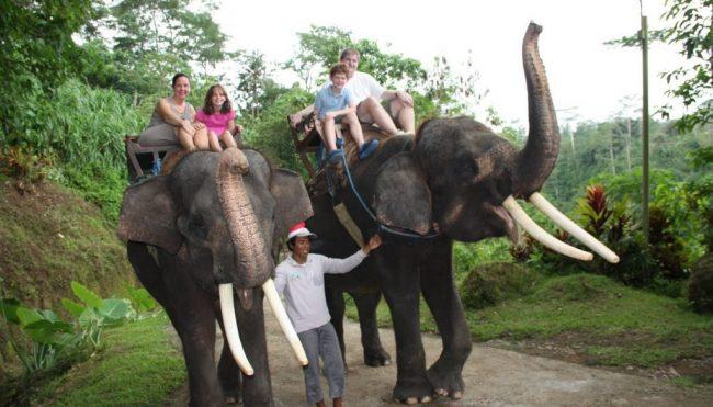 Elephant Camp Petang via Bali 99 tour
