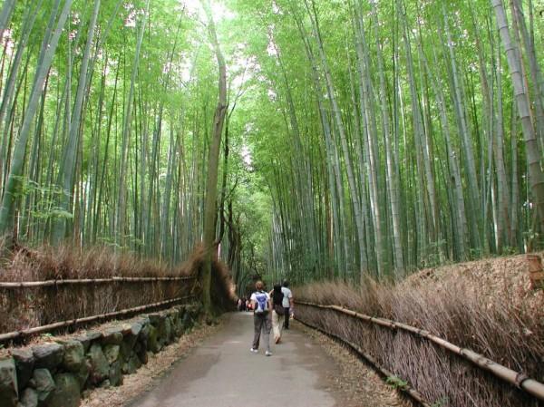 Hutan Bambu Di Kubu Bangli via Banglikabgoid