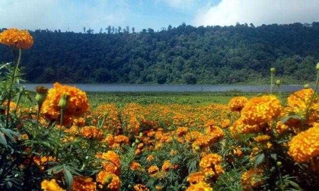 Ladang Bunga Gumilir via Ulundanutrans