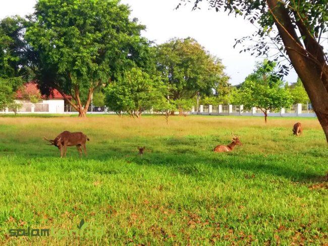 Taman Rusa Bumi Patra via salamtani