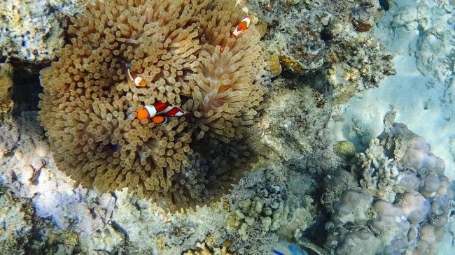 Taman laut Siung 17 Pulau via Betantt