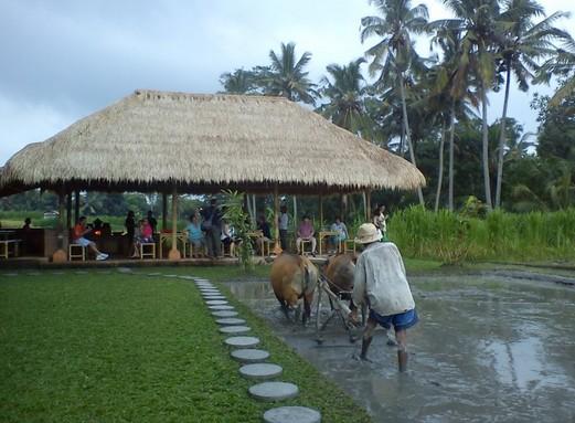 Wisata Desa Guliang kangin