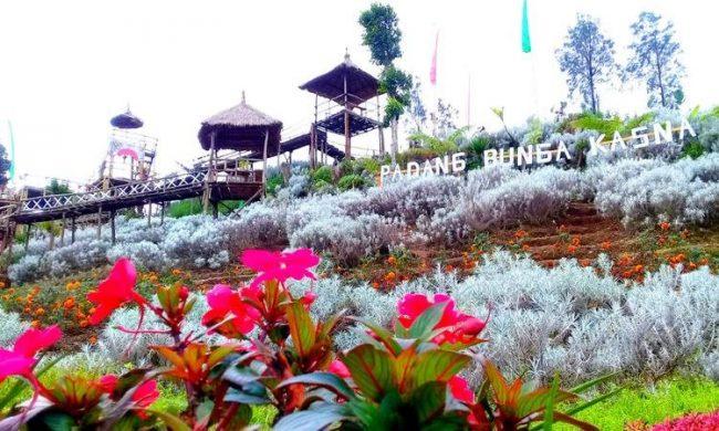 Padang Bunga Kasna via Kompas