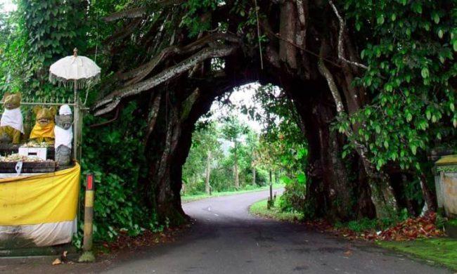 Wisata Bunut Bolong via Panduanwisata