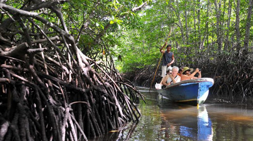 Wisata Hutan Mangrove Lembongan via Kkpgoid