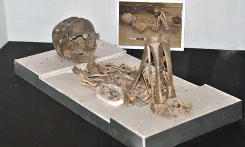 Wisata Museum Manusia Purba
