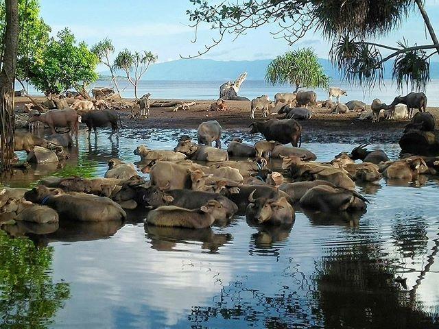 Wisata Pantai Hodo via IG