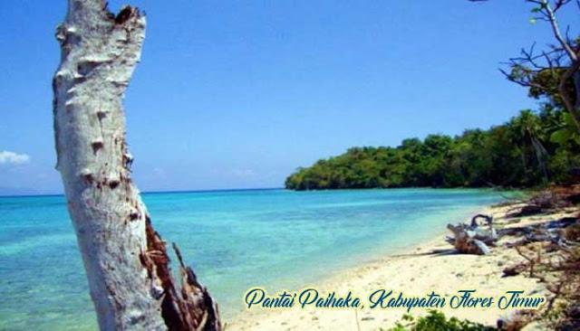 Pantai Paihaka - Tempat Wisata Di Flores Timur
