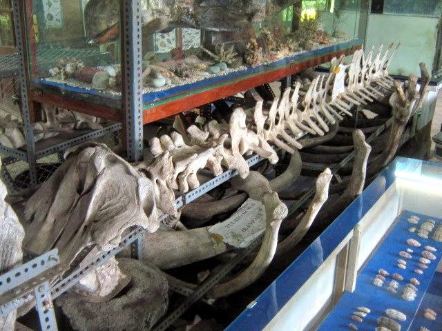Wisata Museum Bahari via Orangflores