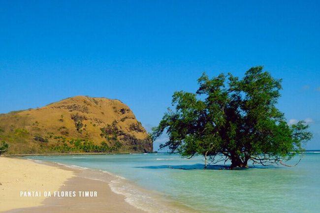 Wisata Pantai Rako Oa