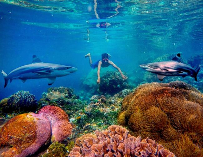 Wisata Taman Laut Pantar via Ig @gungafif