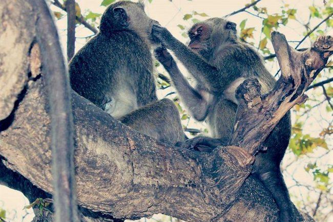 Wisata Taman Rekreasi Gua Monyet via IG @em_motret