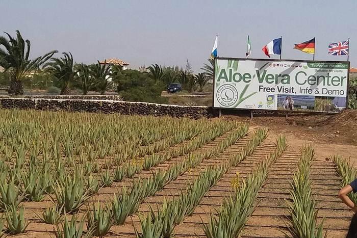 Aloe Vera Center via IG @michellep.07