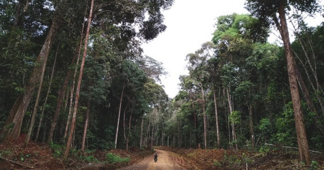 Hutan Adat via MOngabay